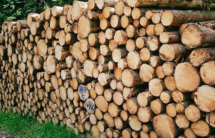 viel Holz, nicht vor der Hütte...sondern am Wegesrand